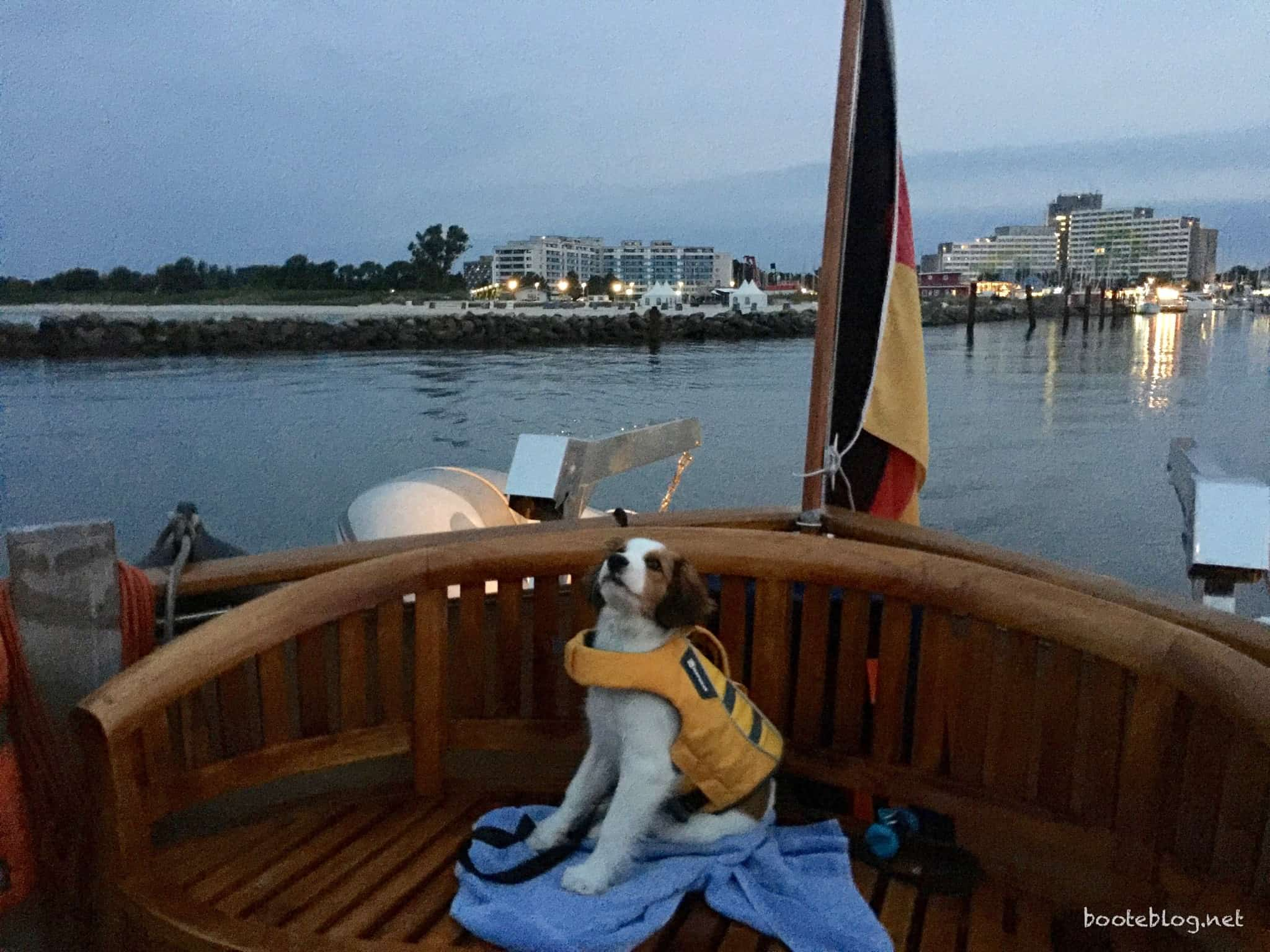 Kooikerhondje Bordhund Ole auf seiner Manöverstation.